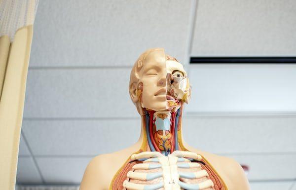 Gifts for Anatomy Teachers