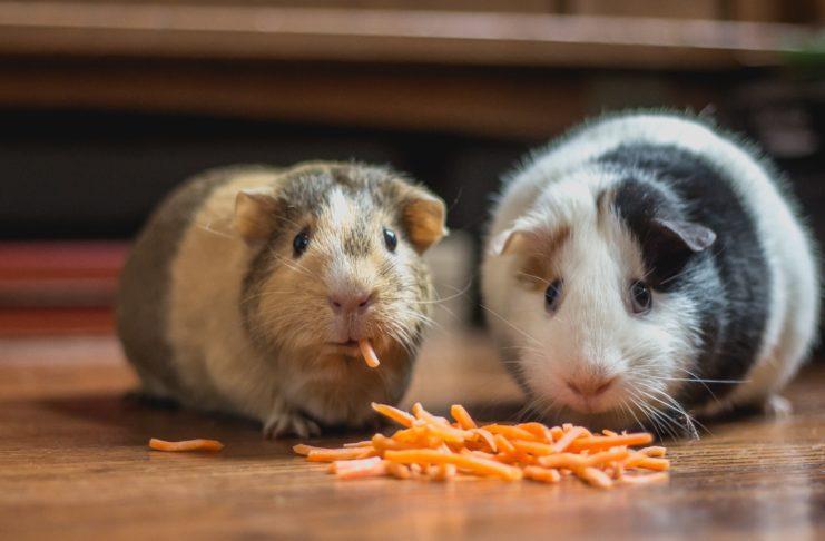 Hamster Gift Ideas