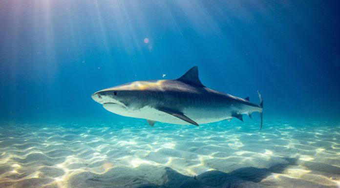 Shark Gifts Ideas