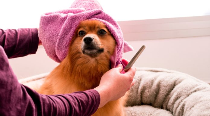 Gifts For Dog Groomer