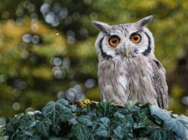 Owl Gift Ideas