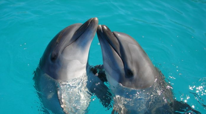 Dolphin Gifts Ideas