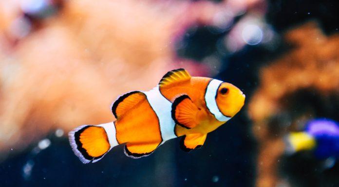 Best Fish Finder Under $400