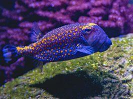 Best Fish Finder Under $300