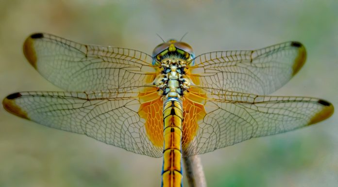 Dragonfly Gift Ideas