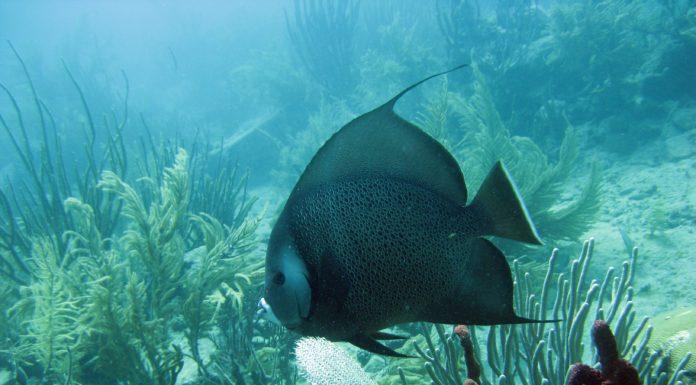 Best Fish Finder Under $1000