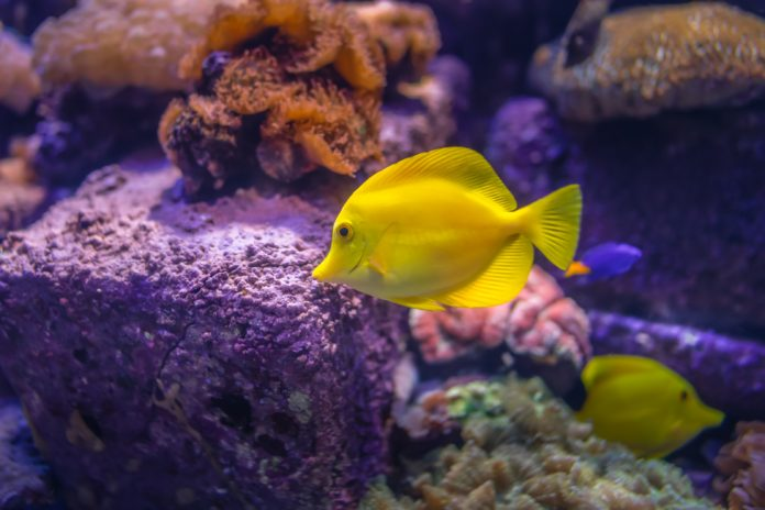 Best Fish Finder Under $200